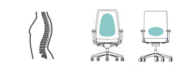 Wirbelsäule und Merkmale Bürostuhl